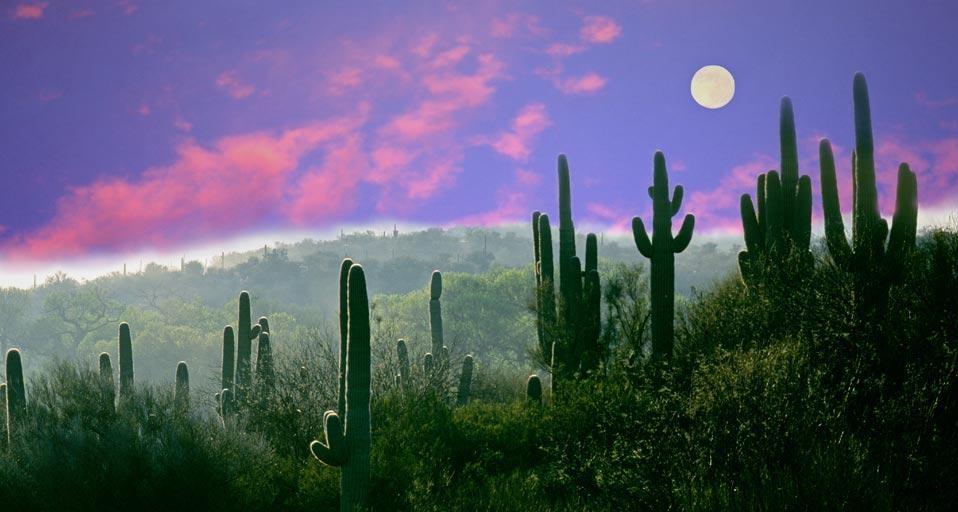 亚利桑那州仙人掌国家公园