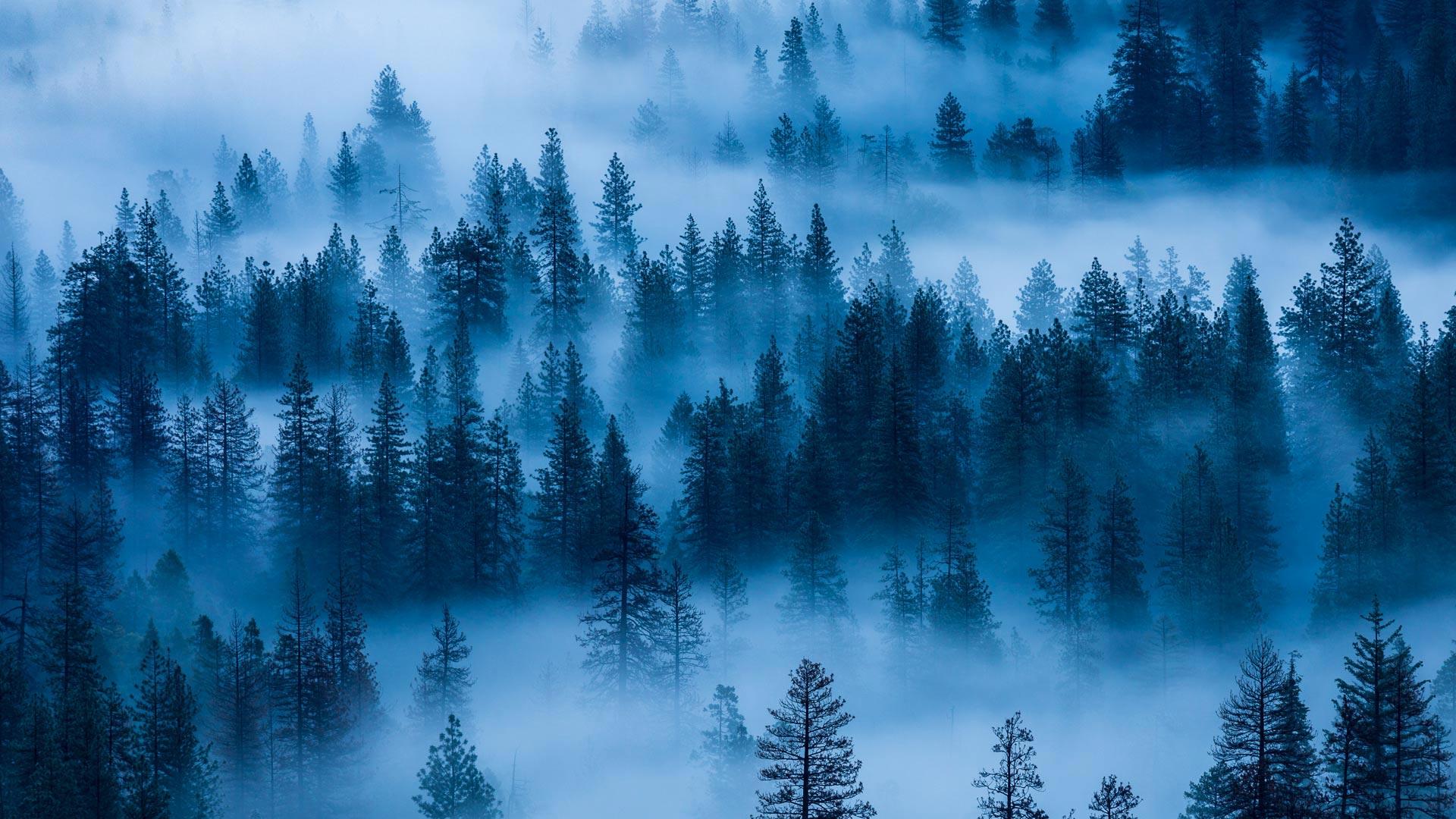 优胜美地国家公园,美国加利福尼亚州